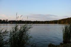 solnedgång över sjön i bakgrundsträden Royaltyfri Bild