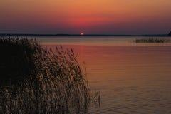 Solnedgång över sjön med vasser och gräs i förgrund royaltyfri bild