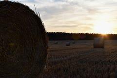Solnedgång över skördat fält med runda baler av sugrör Royaltyfri Bild