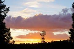 Solnedgång över skogen Royaltyfri Foto