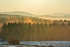 Solnedgång över skogen arkivfoton