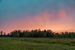 Solnedgång över skogståenden av solnedgången över skogen royaltyfri bild