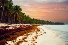 Solnedgång över strandDominikanska republiken, atlantiska kustalger på den härliga kusten, klimatiska anomalier smutsig strand royaltyfri bild