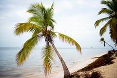 Solnedgång över strandDominikanska republiken, atlantiska kustalger på den härliga kusten, klimatiska anomalier smutsig strand arkivfoton