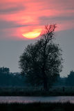 Solnedgång över träd i nationalpark i Tyskland fotografering för bildbyråer