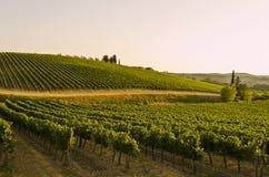 Solnedgång över Tuscan bygd - Italien Royaltyfri Bild