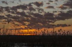 Solnedgång över vassen Arkivbilder