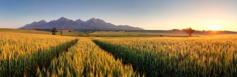 Solnedgång över vetefält med banan i det Slovakien Tatra berget Royaltyfria Bilder