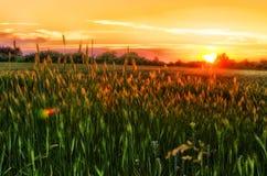Solnedgång över vetefälten Arkivbild