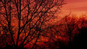 Solnedgång över videoen för timelapse för trädfilialer