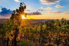 Solnedgång över vingården Royaltyfri Bild