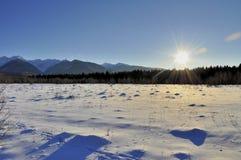Solnedgång över vinterforeten Royaltyfri Fotografi