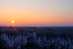 Solnedgång över vinterskogen Arkivbilder