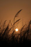 solnedgång 03 Royaltyfria Bilder