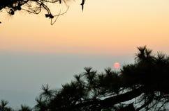 Solnedgång på treen royaltyfria bilder
