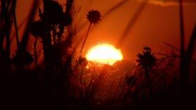 Solnedgång arkivfilmer