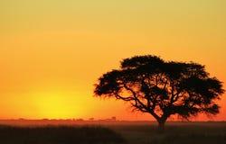 Solnedgång - afrikansk sista lampa och under Arkivfoto