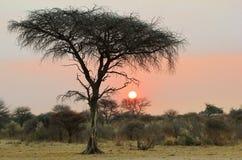 Solnedgång - afrikanska gåtor Royaltyfri Foto