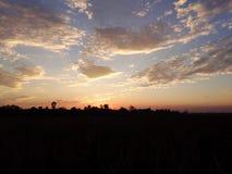 Solnedgång Assam india royaltyfri bild