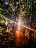 Solnedgång av amasonen arkivfoto