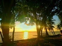 Solnedgång av amasonen royaltyfria bilder