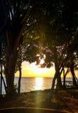 Solnedgång av amasonen arkivfoton