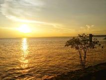 Solnedgång av amasonen arkivbild