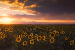 Solnedgång av sommaren Royaltyfria Foton