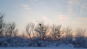 Solnedgång av vintern Arkivbilder