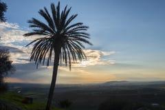 Solnedgång bak en palmträd Arkivbilder