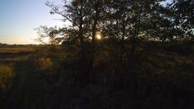 Solnedgång bak ett träd på en äng stock video