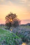 Solnedgång bak ett träd vid en bäck Royaltyfria Bilder