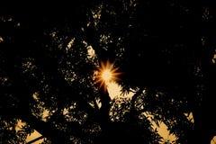 Solnedgång bak gammalt mangoträd Royaltyfria Foton