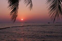 Solnedgång bak kokosnötsidor Royaltyfri Foto