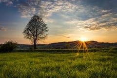 Solnedgång bak kullen och träd Royaltyfria Bilder