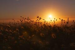 Solnedgång bak misten och det lösa gräset royaltyfri foto