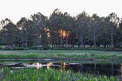 Solnedgång bak träd Royaltyfri Foto