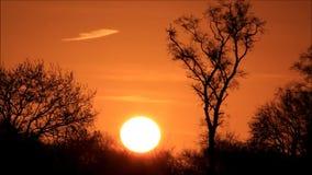 solnedgång bak träd i naturen arkivfilmer