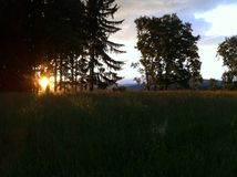 Solnedgång bak träden på kullen Arkivbild