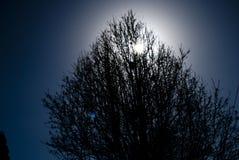 Solnedgång bak trädpanelljus royaltyfria bilder