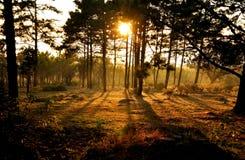 Solnedgång bak tree Arkivbilder