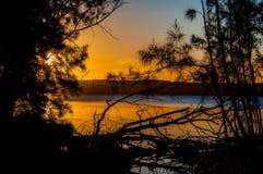 Solnedgång bak treesna Royaltyfri Bild