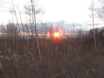 Solnedgång bak unga träden Royaltyfria Bilder