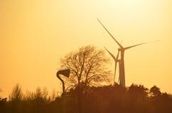 Solnedgång bak vindturbiner Royaltyfria Bilder