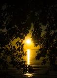 Solnedgång bakifrån ett träd Royaltyfri Bild