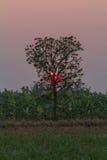 Solnedgång bakom av trädet Arkivbilder