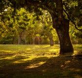 Solnedgång bland mangoträden Royaltyfri Fotografi