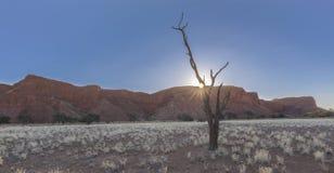 Solnedgång, dött träd och förstenad dyn Royaltyfri Bild