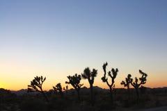 Solnedgång Desertscape Fotografering för Bildbyråer