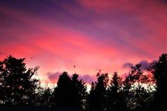 Solnedgång, fåglar och skogen fotografering för bildbyråer